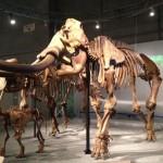 動物たちの歴史を歩む太古の哺乳類展―日本の化石でたどる進化と絶滅―